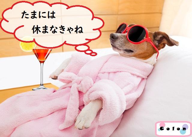 ピンクのバスローブとサングラス姿でくつろぐ子犬